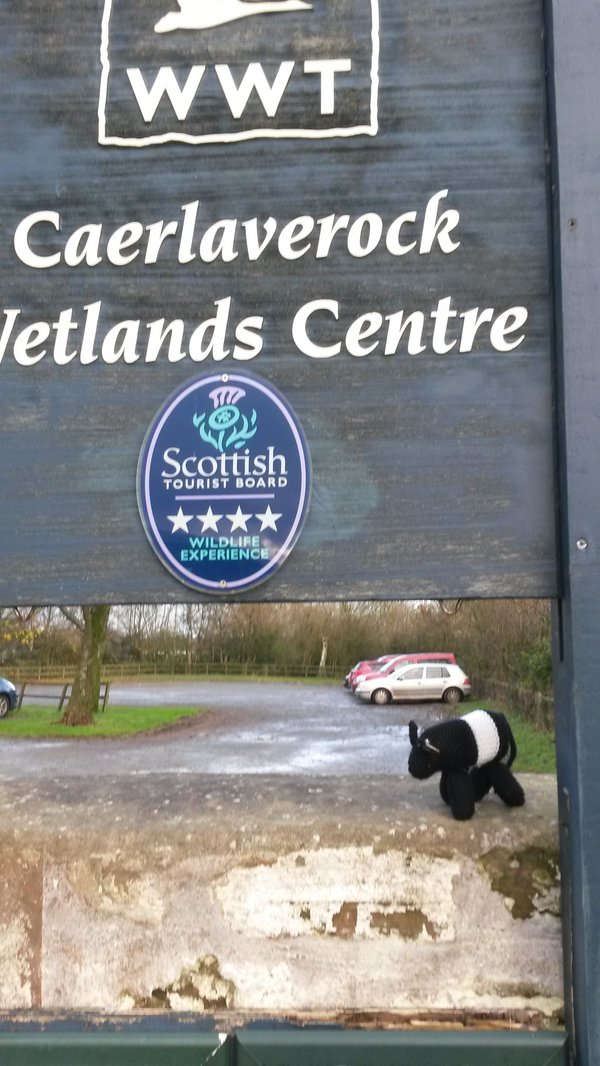 Doonie visited WWT Caerlaverock