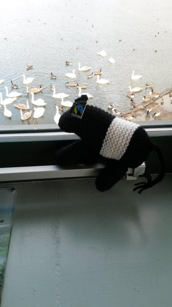 Doonie saw the swans at WWT Caerlaverock